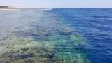 Egipt Sharm el sheikh  rafa koralowa © Piotr