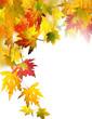 Leinwanddruck Bild - Fall beauty: colorful autumn leaves, Isolated on white background :)
