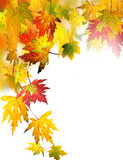 Fall beauty: colorful autumn leaves, Isolated on white background :) - 219412878