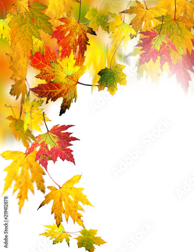 Leinwanddruck Bild Fall beauty: colorful autumn leaves, Isolated on white background :)