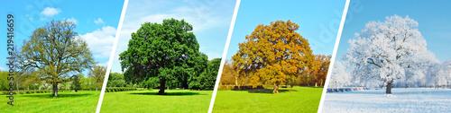 Leinwanddruck Bild Vier Jahreszeiten - Baum Panorama
