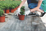 Planting flowers in greenhouse - 219428439