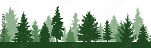 Seamless pattern of forest fir trees silhouette. Coniferous green spruce. Vector - 219432289