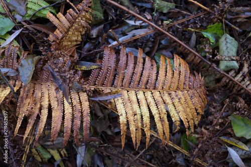 Decaying fern in advanced condition