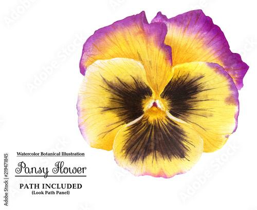 Żółty pansy kwiat z akwarelą
