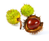 chestnuts isolated on white - 219477277