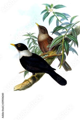 Illustration of bird - 219506260