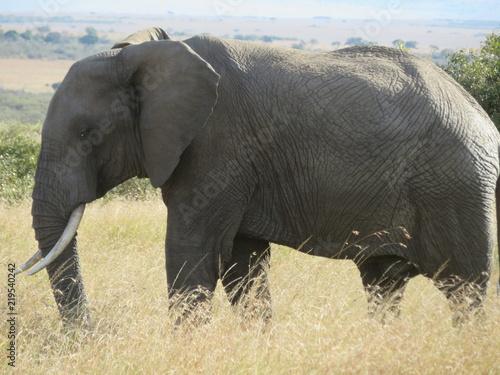 Fototapeta éléphant 2
