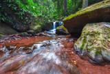 Stream in the Jungle - 219546495