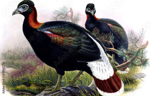 Illustration of bird - 219562276