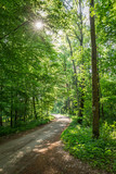 Sunny summer in green forest in Poland, Europe - 219590833