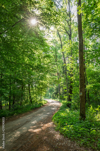 Sunny summer in green forest in Poland, Europe