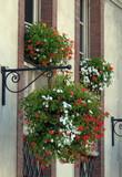 Ville d'Evreux, fleurs suspendues rouge et blanche, Normandie, France