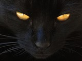 cat animal pet feline cute yellow eyes black kitty close up - 219622805