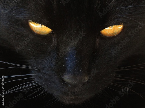 Fototapeta cat animal pet feline cute yellow eyes black kitty close up