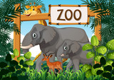 Wild animals in the zoo - 219635215