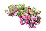 flower bush tree isolated  plant on white background with clipping path - 219664613