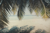 Palm tree and beach, Maldives - 219681008