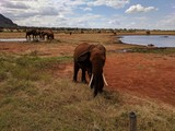 Fototapeta Sawanna - Kenya Tsavo East © ziena