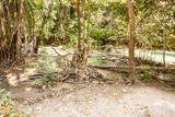 Tropical Thai forest