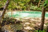Tropical Thai rainforest pond