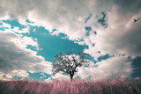 Vintage single tree on imaginative meadow landscape and cloudscape background. Retro color tone effect used. - 219708410