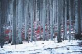 Snowy winter season forest landscape. - 219708419