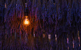 Lavender flower nature wall background. Light bulb lamp concept