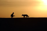 Dog Trainer Silhouettes sunset pet animal friend