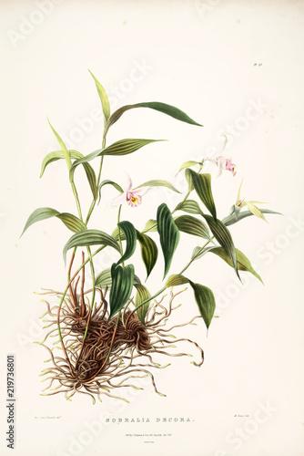 Illustration of flower - 219736801