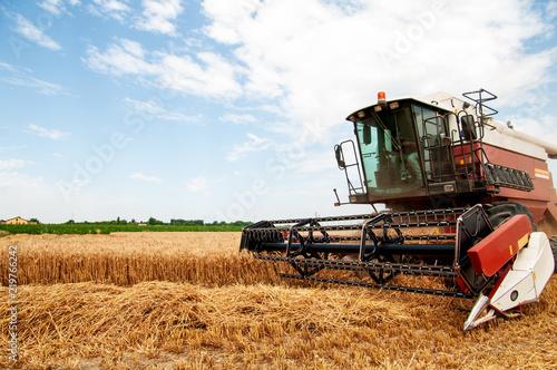Mietitura del grano