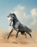 Young gray stallion running on sand - 219777433