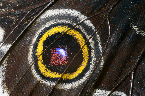 Beautiful butterfly wing, macrophoto - 219780691