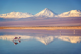 Fototapety Snowy Licancabur volcano in Andes montains reflecting in the wate of Laguna Chaxa with Andean flamingos, Atacama salar, Chile