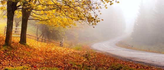Autumn road © alexugalek