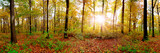 Fototapeta Na ścianę - Panorama of an autumnal forest with bright sun shining through the trees © John Smith