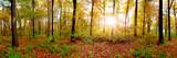 Fototapeta Fototapety na ścianę - Panorama of an autumnal forest with bright sun shining through the trees © John Smith