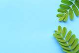 Tropics green leaf on blue background and have copy space. - 219800611