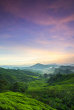 Sunrise Scenery at Tea Plantation Cameron Highland,Malaysia. soft focus,blur available when view at full resolution.