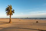 Atardecer playa palmeras