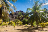 rocher tropical et palmier - 219818216