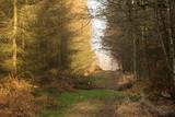 Dróżka leśna