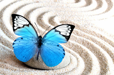 Sand, blue butterfly and spa stone in zen garden © Catwoman