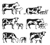 Vector holstein cows and calves collection