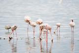 Wild Animals in Kenya, Africa
