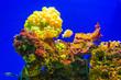 Leinwandbild Motiv aquarium inside of the oceanographic museum in Monaco