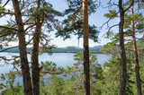 Beautiful view of the lake from the pine forest. - 219910825