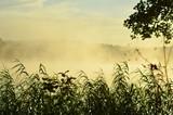 Zamglony wschód słońca w Borach Tucholskich - 219913666