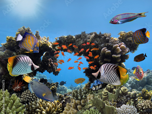 Foto Murales Hard Coral with fish