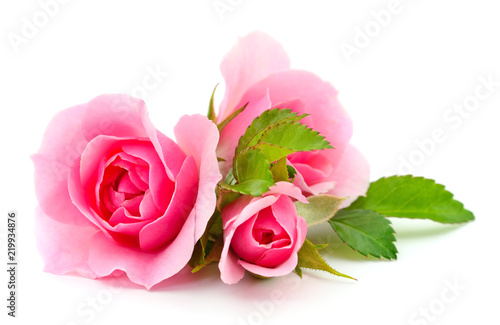 Beautiful pink roses. - 219934876